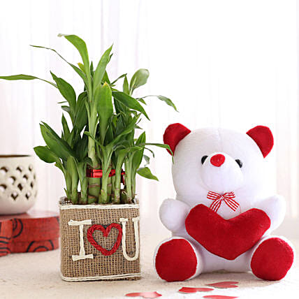 Bamboo Plant with Teddy Online:Plants N Teddy Bears