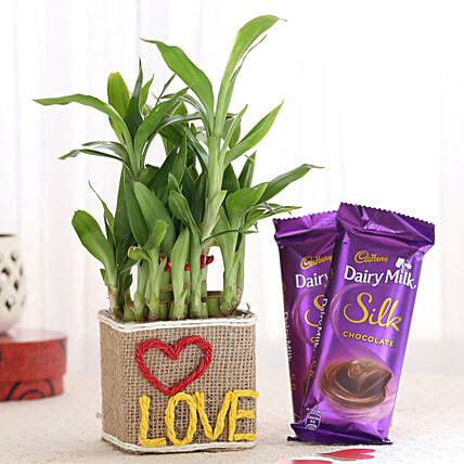 Love Plant Vase and Chocolate Online
