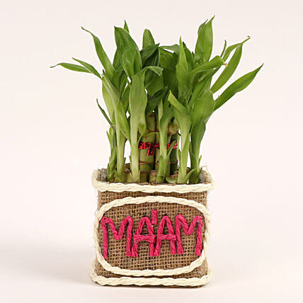 bamboo plant for teachers day:Teachers Day Gift Ideas