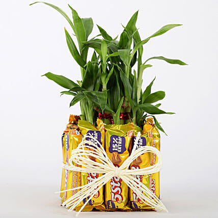 Lucky Bamboo Plant and Chocolate Online
