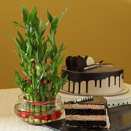 Online Chocolate Cake With Bamboo Plant