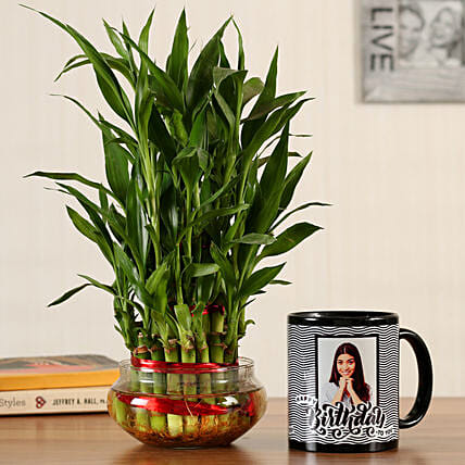 indoor good luck plant with mug