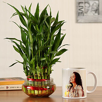 online indoor plant with mug
