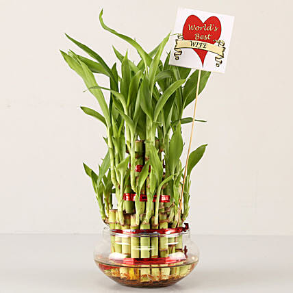 online lucky bamboo for karwa chauth