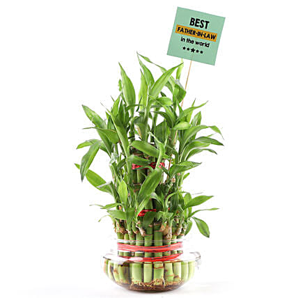 Plant for Fathers Day Online