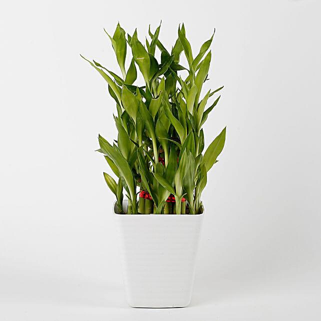 bamboo plant in white vase
