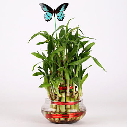 bamboo plant in glass vase