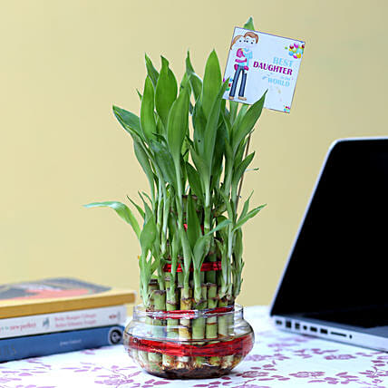 Online Bamboo Plant For Daughter's Day