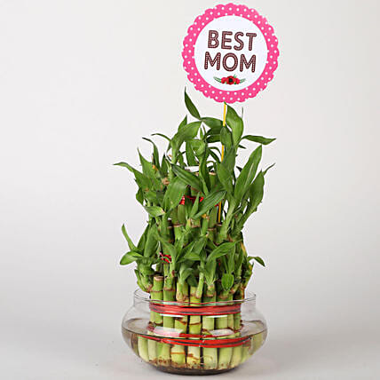 Three Layer Bamboo For Mom