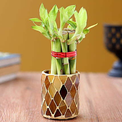 sticks in peach mosaic votive online:Desktop Plant