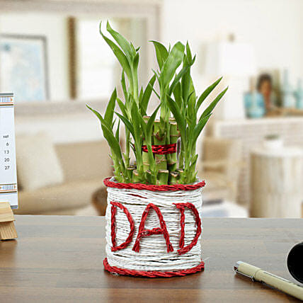2 Layer Lucky Bamboo Plant for Dad:Exotic Plants