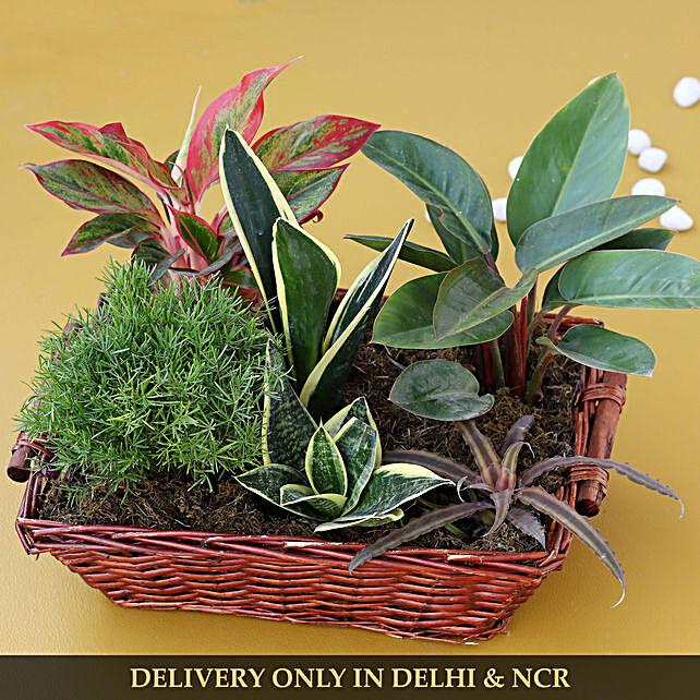 premium plant arrangements