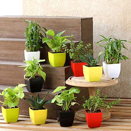 Air Purifying & Leafy Green Plants- Set of 10