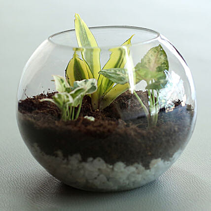 Air Purifying Terrarium Plants Gift Indoor Terrarium Online Ferns N