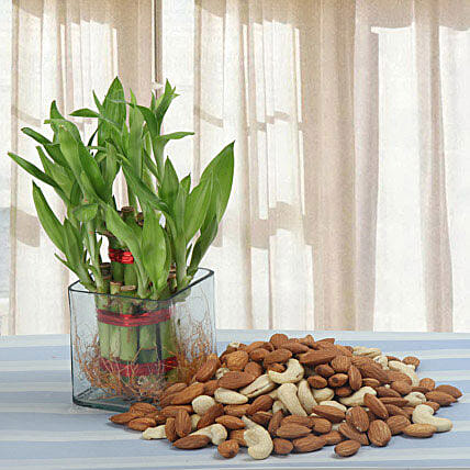 Mixed dry fruits and lucky bamboo:Family Gift Hampers
