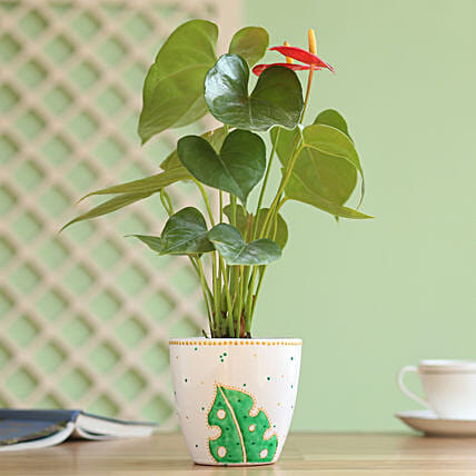 anthurium plant with planter online