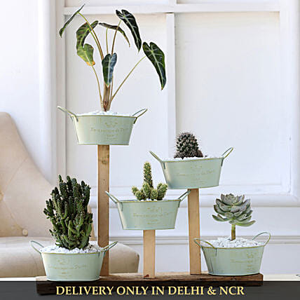 exclusive plant in home décor:Buy Dish Gardens