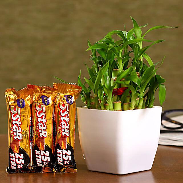 Bamboo Plant And Cadbury 5 Star Combo