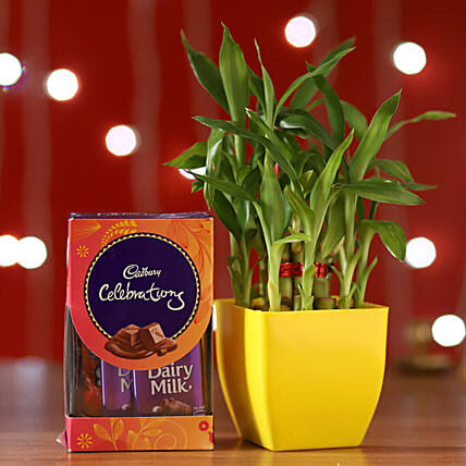 Bamboo Plant & Cadbury Celebrations Box