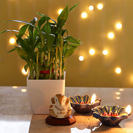 Online Bamboo Plant Combo