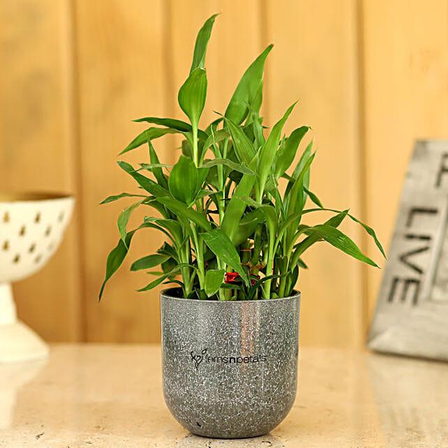 bamboo in melamine pot