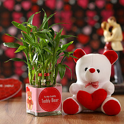 bamboo plant n teddy bear combo for vday