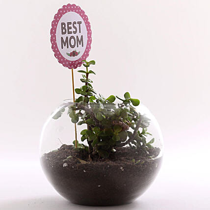 Small plant in glass vase for mothers day