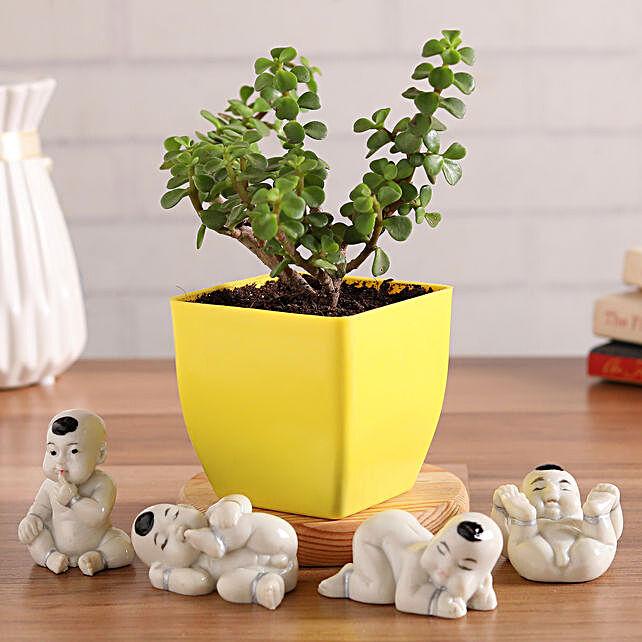 Beautiful Jade Plant With Baby Buddha Figurines