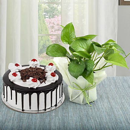 Blackforest Cake with Money Plant:Mothers Day Plant Combos