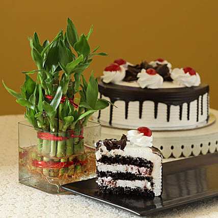 Blackforest cake with 2 Layer Bamboo:Send Plants to Nagpur
