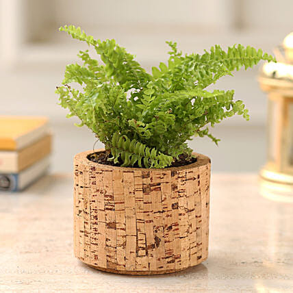 Boston Fern Plant In Pipe Shaped Cork Planter
