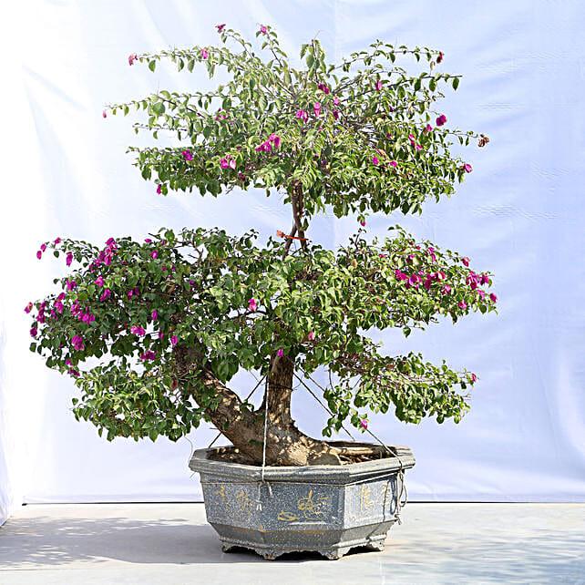 Colourful Bonsai Tree Online