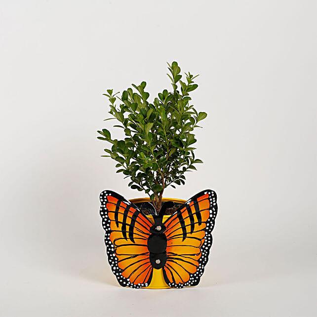 Plant & Planter