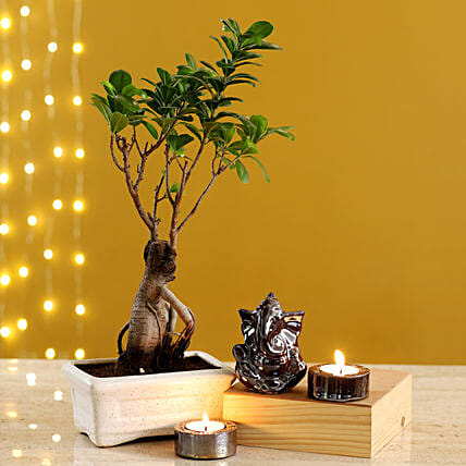 Brown Ganesha Idol & Candles With Ficus Bonsai