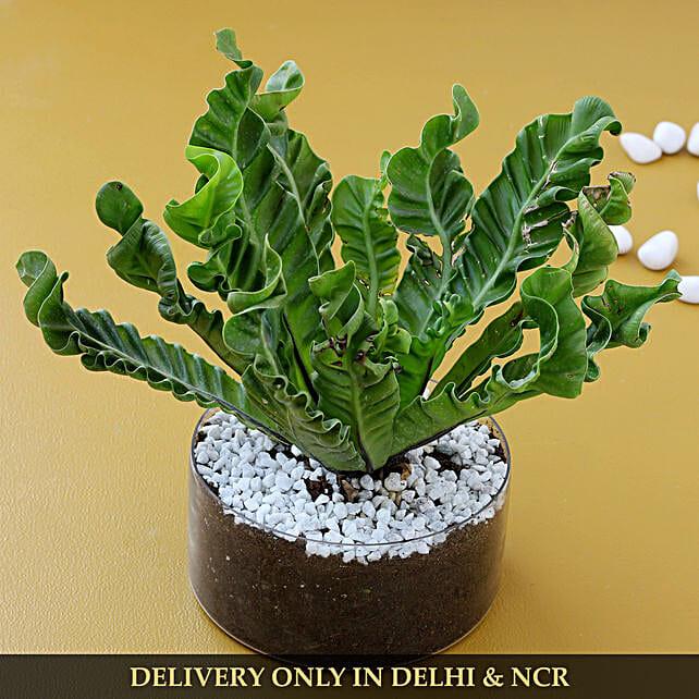 online décor plant