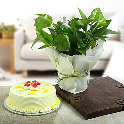 Gift cake with Money Plant:Mothers Day Plant Combos