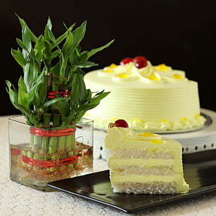 2 Layer Bamboo with Cake:Send Plants to Nagpur