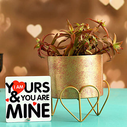 Campfire Plant In Gold Finish Pot Love Quote Table Top