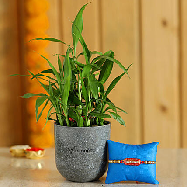 Rakhi & Plant with Beautiful Pot