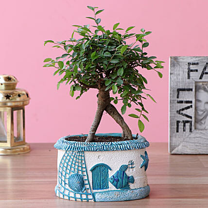 Carmona Bonsai Plant In Sea House Planter