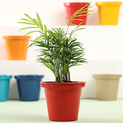 Colourful Indoor Plant Online:Metal Planters Delivery