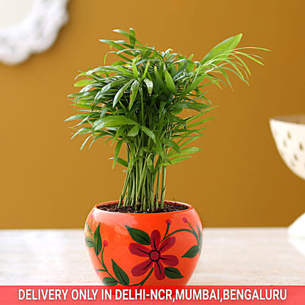 Chamaedorea Palm Plant In Hand Painted Pot Hand Delivery