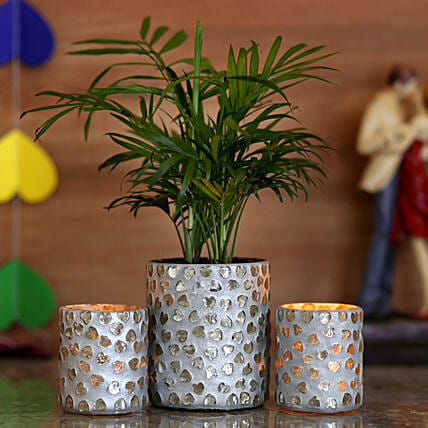 house warming plant with planter online
