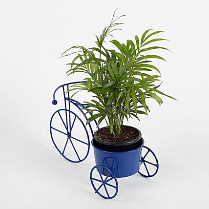 Chamaedorea Plant in Blue Cycle Planter
