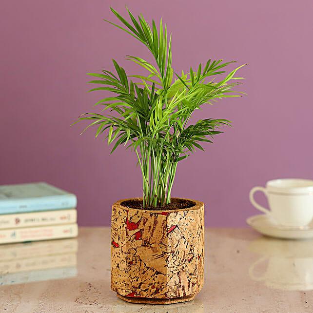 Online Plant In Cork Pot Online