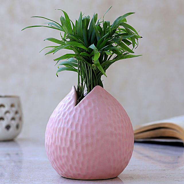 Chamaedorea Plant In Drop Shaped Pot