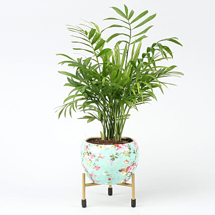 Online Chamaedorea Plant In Floral Design Metal Pot