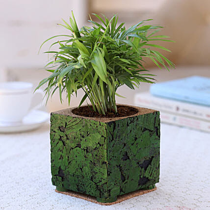 Indoor Plant In Cork Planter:Cork Planters