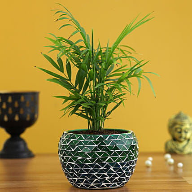 Online Chamaedorea Plant In Green Mosaic Design Metal Pot