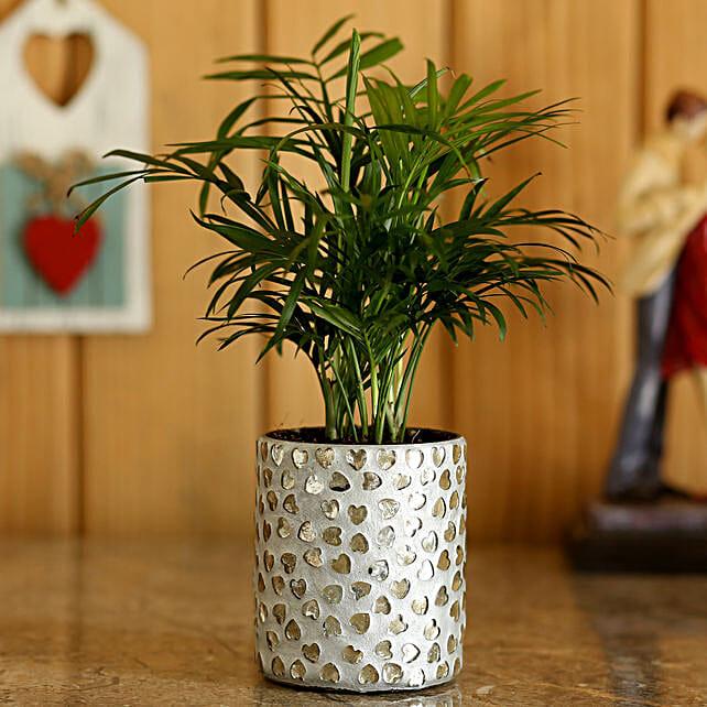 chamaedorea plant with planter for garden décor online